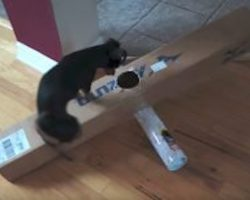 Clever Dog Solves Every Challenging Puzzle His Dad Makes For Him