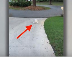 Dad Notices His Pup Struggling At The End Of The Driveway. And Then He Sees It.