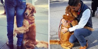 This Golden Retriever Is Obsessed With Giving Hugs To Everyone He Meets