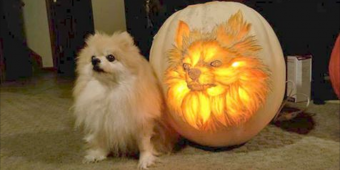 Dog Dad Spends 3 Hours Carving Pumpkin To Look Exactly Like His Pomeranian
