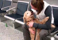 Dog reunites with owner after months apart – now watch his amazing reaction