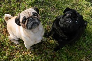 dogs-82799_960_720