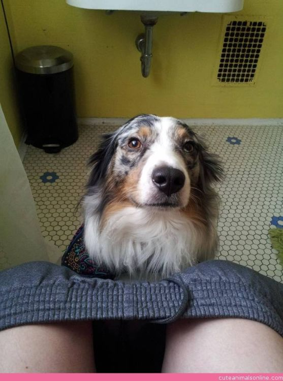 10 Reasons Why Dogs Follow You To The Bathroom