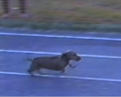Hilarious Dog Cheats And Wins The Race. But You'll See Why Nobody Seemed To Mind.