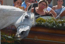 Horse Attends Owner's Funeral, Catches His Scent And Breaks Down In Final Goodbye
