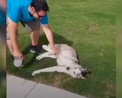 Clever Husky Refuses To Leave Park – Dad Finally Outsmarts Him