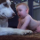 Infant Crawls Up And Reaches For Husky. Dad's Captured Footage Goes Viral