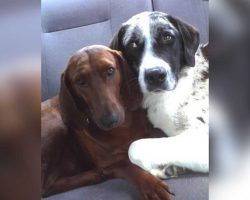 Dog Adopts Puppy At Shelter, Refuses To Get Adopted Without Him