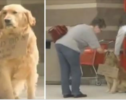 Lonely Dog Waits Outside Target With Sign Around His Neck — Then People Read It.