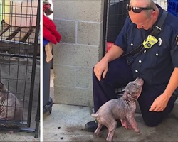 Sick Stray Puppy Is Sad At Shelter, Until She Reunites With The Firefighter Who Saved Her From Abuse