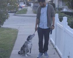 Man Goes To Shelter And Saves Elderly Dog. One Day On A Walk, It Stops And Stares Up At Him