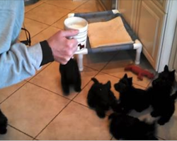 "Puppies Crowd Around Milk Bowl To Produce ""Scottie Pinwheel"""