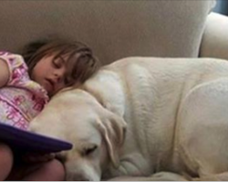 Dog Senses 4-Year-Old Girl's Blood Sugar Level Changing To Unsafe Level And Alerts Parents