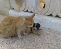 Motherless Puppy is Crying for Someone to Save Him. Cat Hears Him and Her Reaction is Just Precious!