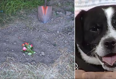 Family Buries Dead Dog In Grave But 14 Hours Later He's Standing At The Front Door