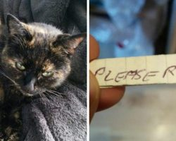 Cat Comes Home With Paper Tied To Her Collar, Then Dad Realizes It's A Note From The Neighbors