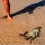 Family Saves Stranded Octopus – The Next Day, He Returns To Thank Them In Remarkable Fashion