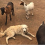 Farmer Forced To Abandon Dog & Goats During Wildfire— Returns To Witness A Miracle.