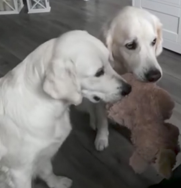 Dog Possessive Over Food With Other Dogs