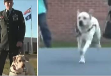 Man Visits Prison With Service Dog – Then Dog Sprints Towards Inmate