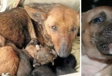 Stray Dog Found Warming Shivering Puppies, Rescuers Shocked To See What Else She's Protecting…