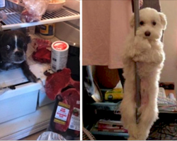 19 Pets Who Swear Up And Down It's Not What It Looks Like