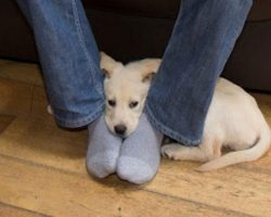 This is why dogs like to sit on your feet – I had no idea!