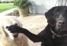 There's a Reason Behind Every Dog's Actions. I Had No Idea!
