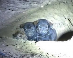 Man Tries Saving 8 Pups From Cave – Gets Beautiful Surprise After Second Look