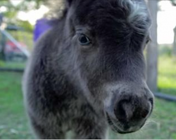 Tiny foal walks up to the camera. But in a flash — try not to smile at this incredible display