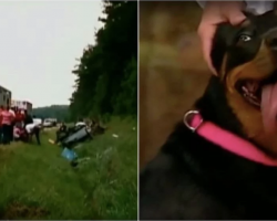 Woman Saves Dog From Wreck. Dog Takes Her Back To Woods, Then Makes A Surprising Discovery