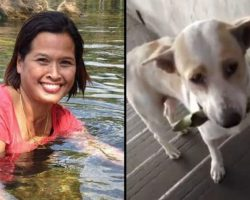 Woman Shows Kindness To Stray Dog. Next Day He Shows Up With Gift That Leaves Her Stunned