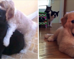 10 Cats Who Don't Know What To Think About The New Puppy