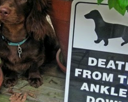 14 Hilariously Clever And Unique 'Beware Of Dog' Signs