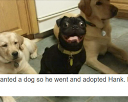 17 Funny Tumblr Posts About Dogs To Make Your Day That Much Better