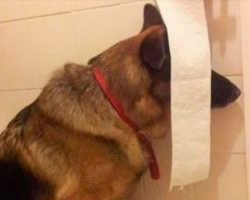 23 Dogs That Think They've Found The Perfect Hiding Spot