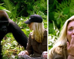 6 Years After Raising Wild Gorilla He Introduces His Wife, Despite The Warnings, She Gets Too Close