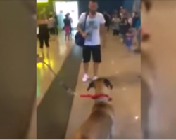 Dog Stops And Stares At The Owner He Hasn't Seen In 3 Years, But The Real Reaction Is Coming