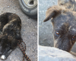 Couple Makes Quick Pit Stop–When They Come Out, They Find Strange Dog Lying Next To Car