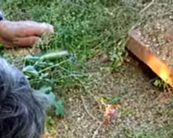 Couple Shine Light Under a Burrow. 40 Seconds Later, She Melts Everyone's Hearts!
