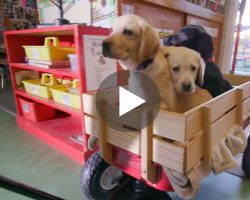 For Every View Of This Video A Pound Of Dog Food Will Be Donated To Shelters! YES!