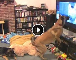 He Secretly Films His Dog Watching TV. Now Watch When His Favorite Movie Comes On