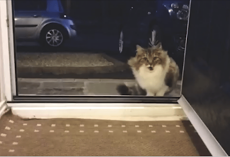 Homeless Cat Begging To Come Inside House, Gives Home Owners SWEETEST Surprise When They Let Her In!