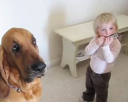Toddler and Dog Sing the Blues