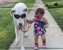 A Little Girl And Her Disabled Dog Share A Bond That's Being Recognized Worldwide