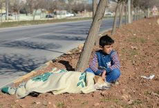 Little boy is honored after staying by the side of a shivering stray dog until help arrived