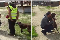 Little Dog Was Lost And Lonely For Years, Watch The Heart-Wrenching Moment She Smells A Familiar Smell