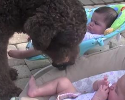 "Giant Dog Approaches Twin Baby Girls. His ""Request"" Made Mom Run For The Camera"