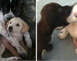 17 Puppy Best Friends — Because You Need More Puppies In Your Life