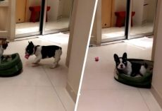 Puppy Finds Cat In His Bed So He Retaliates. His Reaction Is Hilarious!